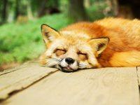 Natürlicher Schlaf – wohltuend und gesund